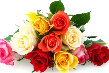 colorful-roses-xln